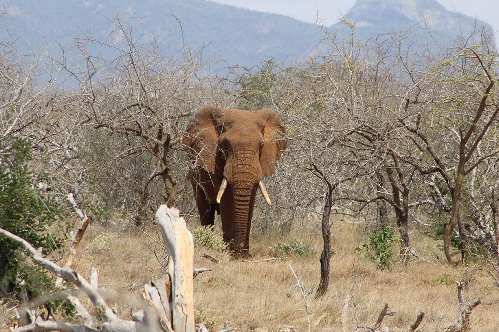 1708_3_Sub_Elephant