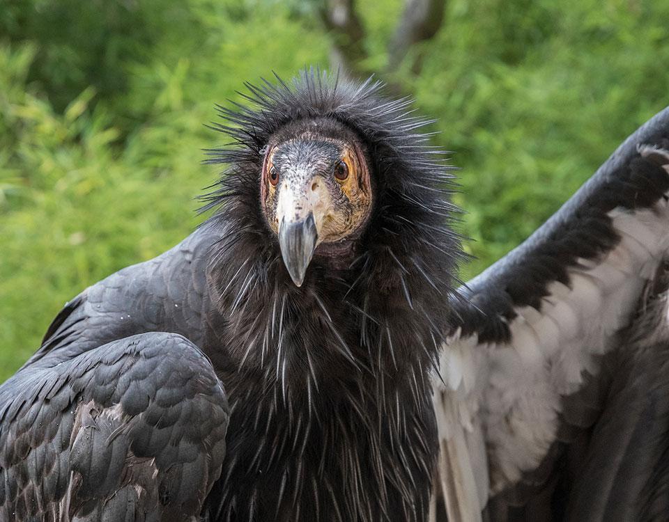1709_3_Vulture2