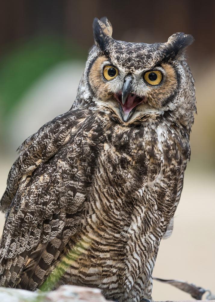 1802_03_15_Owl