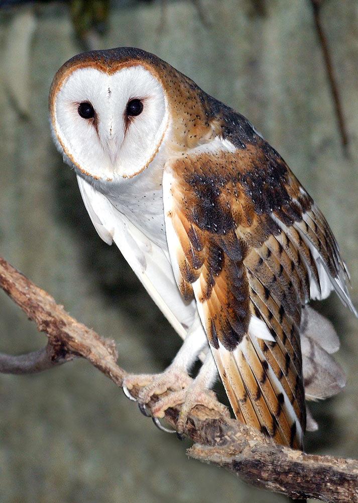 1803_02_05_Owl
