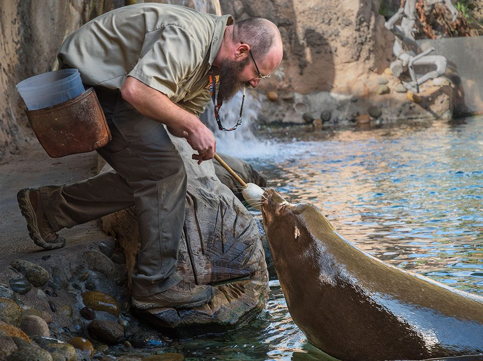 Keeper Brian Martinez and Buddy the sea lion.