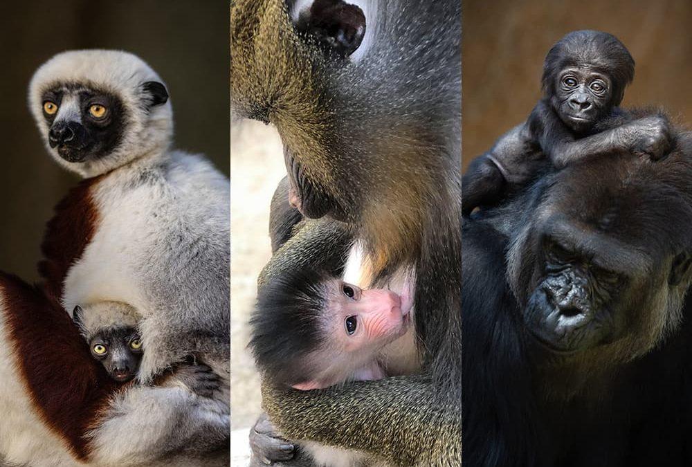 Baby animals!