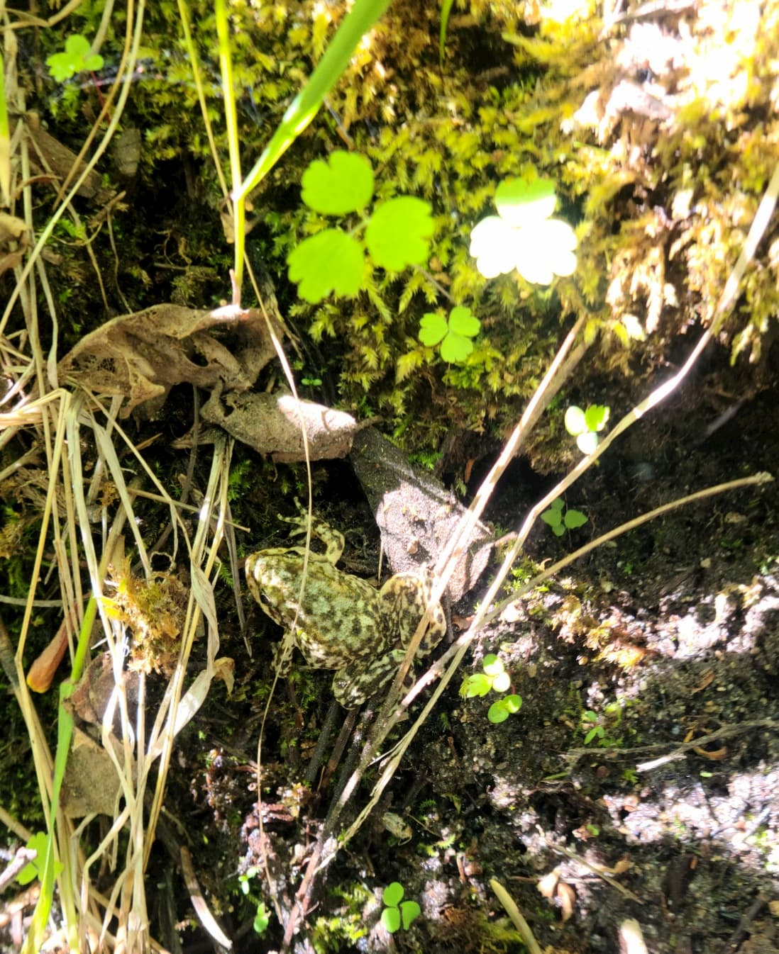 Tadpoles and froglets